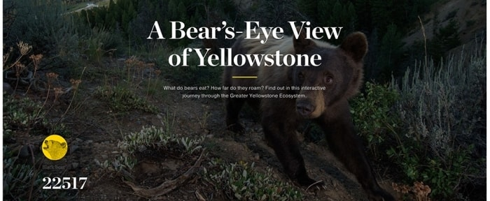View Information about A Bear's-Eye View of Yellowstone