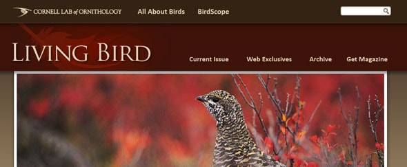 View Information about Livingbird