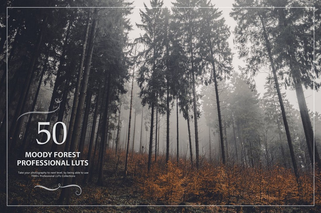 50 Moody Forest LUTs for Lightroom