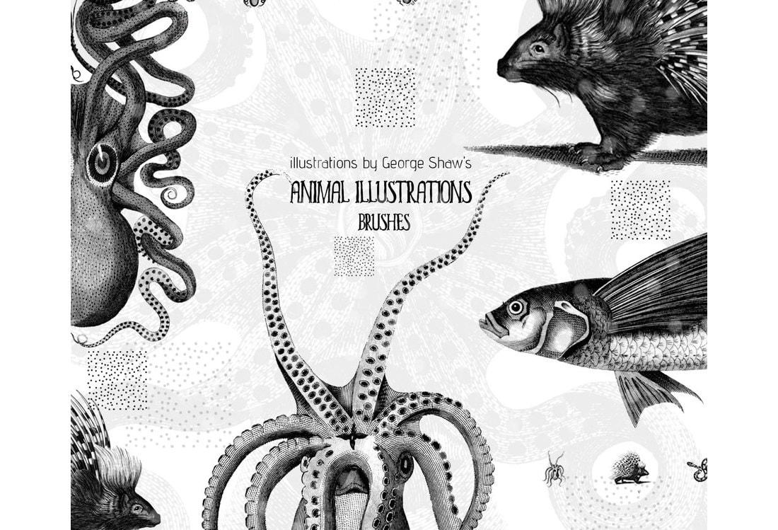 CC0 Free Animal Illustrations Brushes