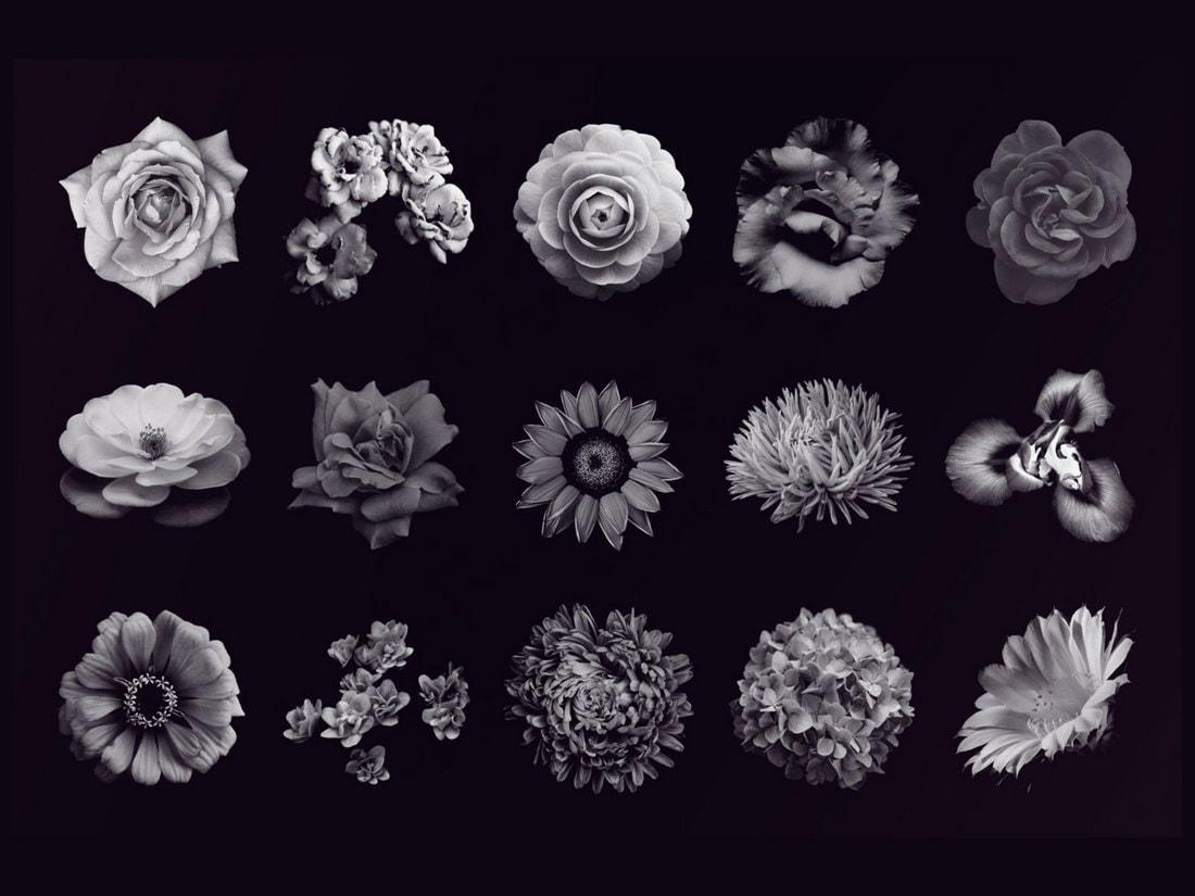 Elegant Flower Free Photoshop Brushes