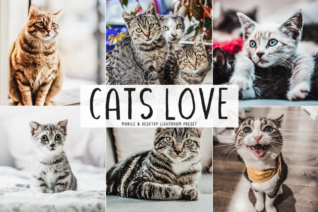 Free Cats Love Photoshop Actions