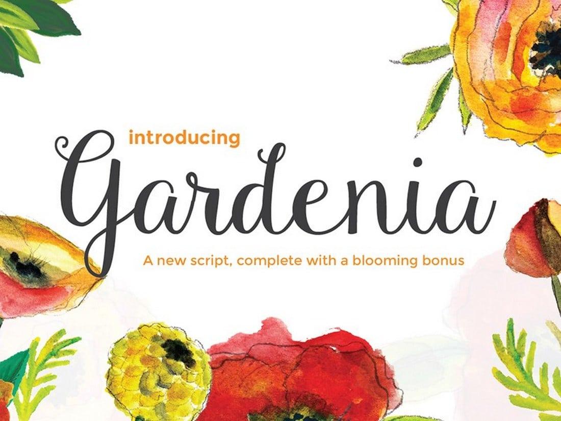 Gardenia-Script 30+ Bold & Free Script Fonts design tips  Typography|fonts|script