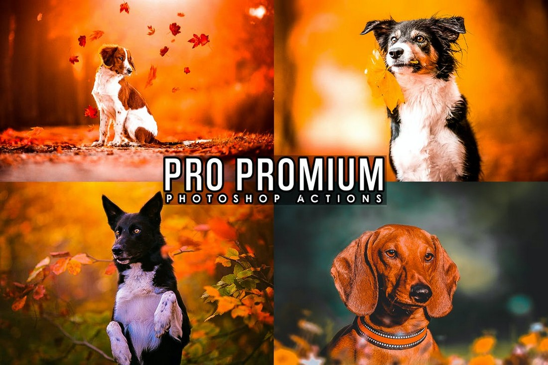 HDR Photoshop Actions for Animal Photos