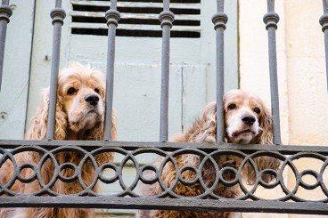 dog-empathy