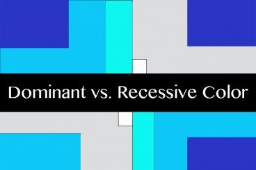 Understanding Color: Dominant vs. Recessive Colors