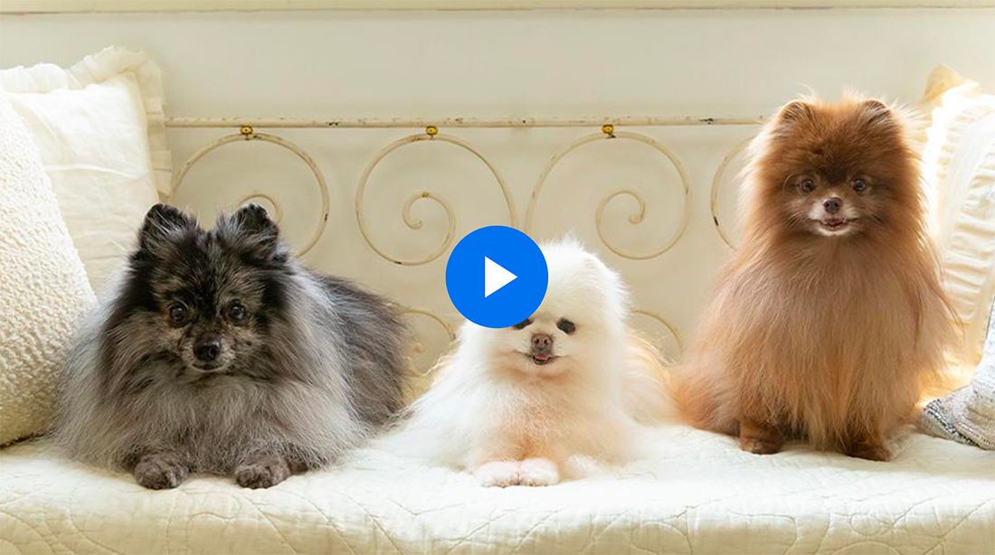 lightroom-pets 15+ Best Lightroom Tutorials for Beginners + Pros design tips