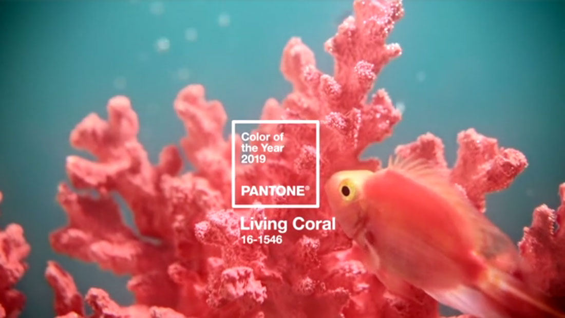 living-coral How to Use the 2019 Pantone Color of the Year in Design Projects design tips