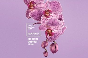 Radiant Orchid Named Pantone Color of the Year: Now What?