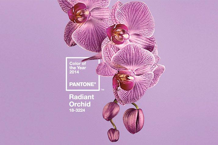 orchid-lede