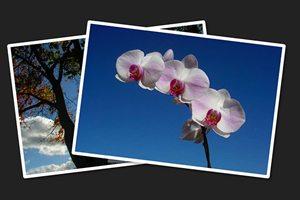 Build a Fun Photo Swap Animation With CSS Keyframes